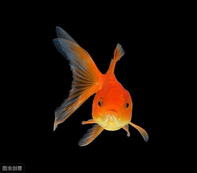 趣味测试:你第一眼最喜欢哪条鲤鱼,测出你最近会有什么好运缠身